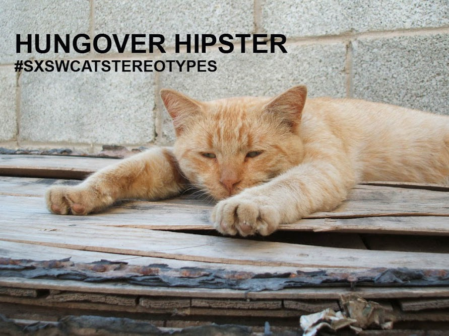 Hungover hipster cat